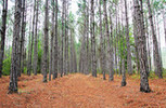 Apple Buys Forests to Produce Sustainable Packaging   Inspiring Sustainable ICT   Scoop.it