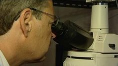 Epilepsie : une découverte majeure des chercheurs de la Timone à Marseille | EntomoNews | Scoop.it
