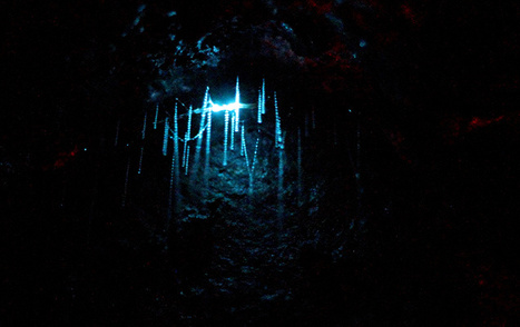 Cave-dwelling glowworms observe their neighbors and synchronize their luminescence cycles to match one another | Interesting Reading to learn English -intermediate - advanced (B1, B2, C1,) | Scoop.it