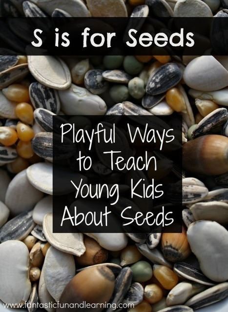 35 Seed Activities for Young Kids | Fantastic Fun & Learning | Learn through Play - pre-K | Scoop.it