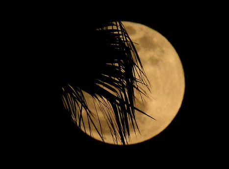 La Lune de périgée a illuminé le ciel - LeMonde.fr | Merveilles - Marvels | Scoop.it