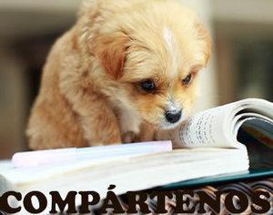 Sentidos de los perros | PERROSPEDIA | Mas mascotas | Scoop.it