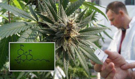 Cannabidiol (CBD): The Cat's Out of the Bag with This Cure-All | Cannabinoid Issues | Scoop.it