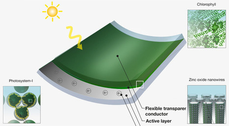 MIT creates solar cell from grass clippings | BarFabLab | Scoop.it