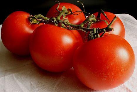 Filière de la tomate : un guide pour évaluer l'impact socio-économique, environnemental et nutritionnel des choix de productions - AFNOR | HORTICULTURE BOTANIQUE | Scoop.it