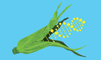 Wed 3 Dec debate - (live stream) Genetically Modified Food | Plant Biology Teaching Resources (Higher Education) | Scoop.it