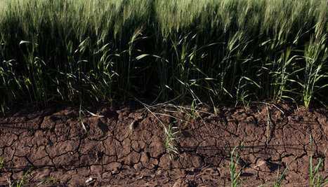 A Jolt to Complacency on Food Supply | Sustain Our Earth | Scoop.it