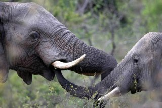 Even Engineers are talking about wildlife trafficking!   Wildlife Trafficking: Who Does it? Allows it?   Scoop.it