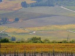 SA wines scoring well in the US | South Africa | Scoop.it