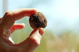 Cultibotics: Pushing Back Deserts through Aerial Seeding | Cultibotics | Scoop.it