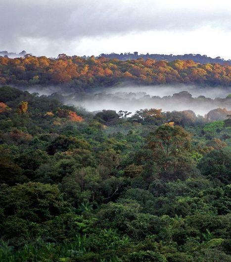 Guyane : Huit millions d'hectares de forêt | Biodiversité & Relations Homme - Nature - Environnement : Un Scoop.it du Muséum de Toulouse | Scoop.it