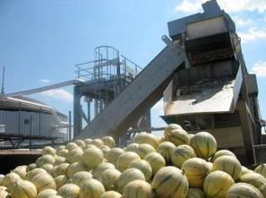 La méthanisation : quand les fruits invendus produisent de l'énergie   Innovations énergétiques   Scoop.it