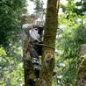 Chavira Tree Trimming