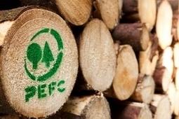 Málaga presenta la exposición El bosque. Mucho más que madera - Xornal Galicia   Noticia Compartida por Grupo DIEZMA   Sector Parquet   Scoop.it