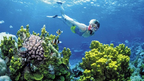 Coral reefs show sensitivity to climate change - Technology & Science - CBC News | Climate change challenges | Scoop.it