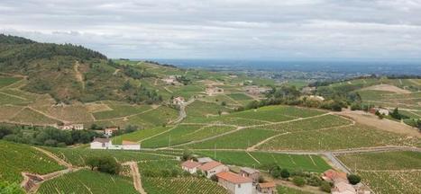 Union des vignerons du Beaujolais : « Notre organisation est en train de se restructurer » | Le vin quotidien | Scoop.it