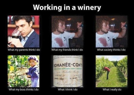 Working in a winery | What I really do | Scoop.it