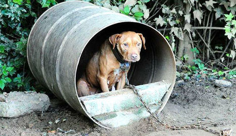 Authorities bust multi-state dog fighting ring - WNCN | End dog fighting! | Scoop.it