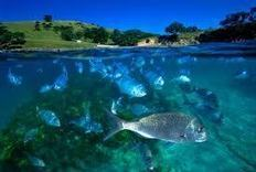 Au Pair Link Auckland: Snorkelling at Goat Island!!!   Risk Management AS 2.7   Scoop.it
