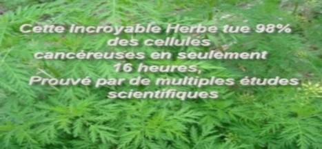Cette Incroyable Herbe tue 98% des cellules cancéreuses en seulement 16 heures - Esprit Science Métaphysiques | Santé | Scoop.it