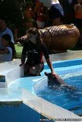 #Dolphin '#RealityShow' filming #suspended in #Portugal ~ #exploiting !!! | Rescue our Ocean's & it's species from Man's Pollution! | Scoop.it