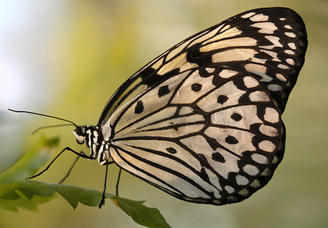 The Nature That Has Inspired High-Tech Advances | Biomimicry | Scoop.it