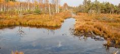 Zones humides : les préconisations du CGEDD pour un futur plan | ZONES_HUMIDES ET AGRICULTURE | Scoop.it