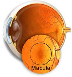 Unos 5 millones de españoles están en riesgo de padecer enfermedades de retina | Salud Visual 2.0 | Scoop.it