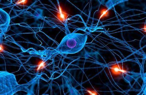 10 cosas que el sistema nervioso controla | Ciencias Naturales | Scoop.it