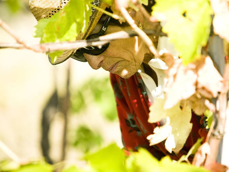 Indie Wineries in Le Marche: Fattoria San Lorenzo, Montecarotto | Wines and People | Scoop.it