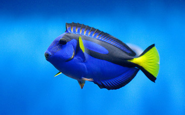 5 #Incredible #FishBehaviors That Show Just How #Intelligent They Really Are! #thinkB4uEat | Rescue our Ocean's & it's species from Man's Pollution! | Scoop.it