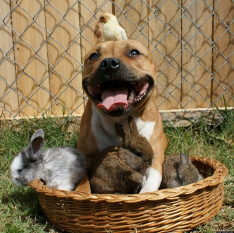LOOK: More Irresistable Photos Of The Pit Bull With The Bird On His Head   Xposed   Scoop.it