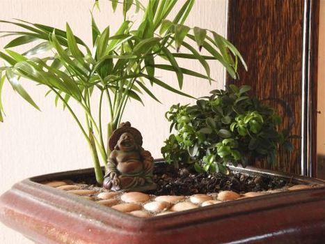 The Mini Garden Guru - Your Miniature Garden Source | Green Things | Scoop.it