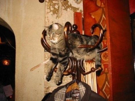 C'est incroyable! Les chats vont vraiment se fourrer n'importe où! | Funny and crazy cats | Scoop.it