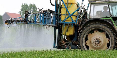 Les agriculteurs, premières victimes des pesticides | apiculture31 | Scoop.it
