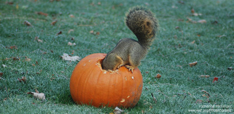 How to Recycle Halloween Pumpkins for Wildlife | Landscape Design DIY, Tips, and Best Practices | Scoop.it