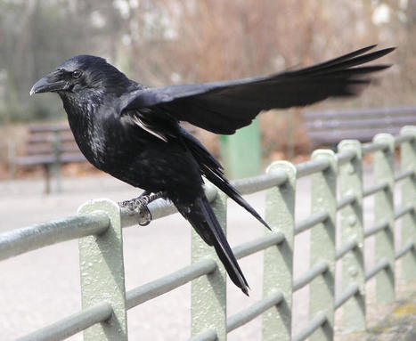 10 oiseaux que l'on rencontre en milieu urbain - DEFI-Écologique : le blog   De Natura Rerum   Scoop.it