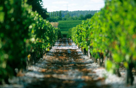 Jane Anson: Secret Bordeaux white wines | Vitabella Wine Daily Gossip | Scoop.it
