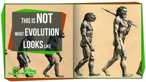 Evolution Doesn't Look Like You Think It Does | Science Bit Favourites | Scoop.it