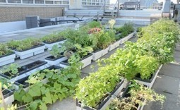 Safely Integrating Urban Agriculture With Urban Living - Food Safety News | nidia.carreno | Scoop.it