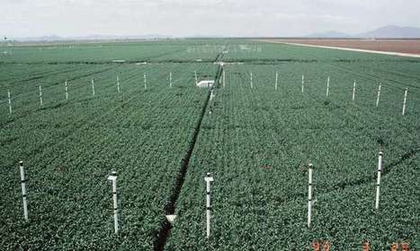 Could global warming's top culprit help crops? | CALS in the News | Scoop.it
