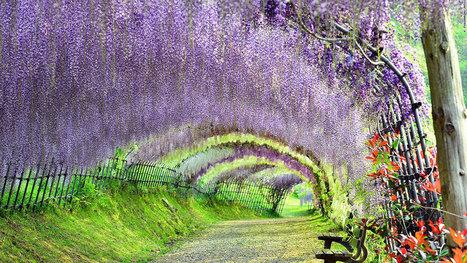 31 lieux merveilleux qui dévoilent toute la beauté naturelle du Japon | SandyPims | Scoop.it