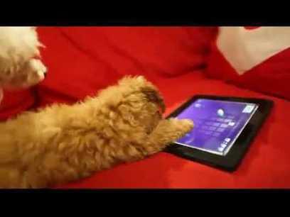 Apps voor je huisdieren | ICTMind | Scoop.it