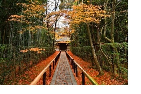 12 of the best places in Kyoto to enjoy the autumn colors - ROCKETNEWS24 | ExoticGardening | Scoop.it