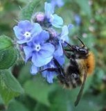 British Bees | In the garden | Scoop.it