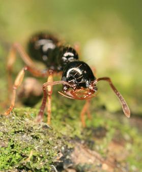 Risques sur le commerce et les échanges de fourmis | EntomoNews | Scoop.it
