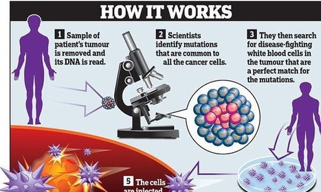 Cancer 'revolution': Immune system could kill EVERY diseased cell | Plant Based Transitions | Scoop.it