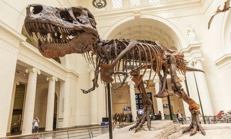 Los dinosaurios, ni sangre fría ni caliente | Tecnología Bachillerato | Scoop.it
