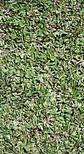 Gazon : la sélection des semences, en quête du meilleur... - Le blog ... | Fongicides et herbicides pour gazon | Scoop.it