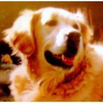 Adopting An Older Dog   Helping  Domestic Animals And Wildlife   Scoop.it